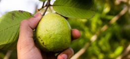 Nová aplikace pomůže zemědělcům v boji se škůdci