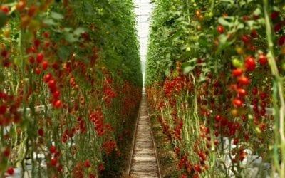 Článek Zemědělství jako HI-TECH obor